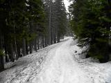 Droga z Samotni ku Domkowi Myśliwskiemu