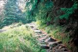 Droga z Jagniątkowa na grań