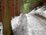 Tajemniczy las po drodze z Pecu na Śnieżkę