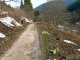Droga z Pecu w stronę Śnieżki