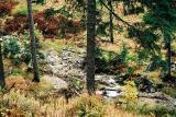 Jesienny strumień