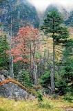 Czerwone drzewo w Czarnym Kotle